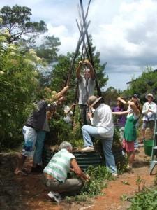 Organic gardening students erecting bamboo tripod