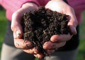 soil-2b