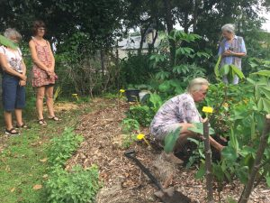 Tree planting At Yandina Community Gardens