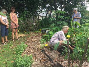 Tree planting At Yandina Community Gardens