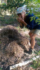 compost_bay_making