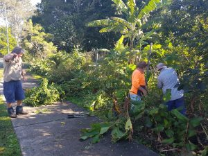 Yandina Community Gardens clearing weed trees from perimeter