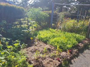 Yandina Community Gardens thriving garden beds