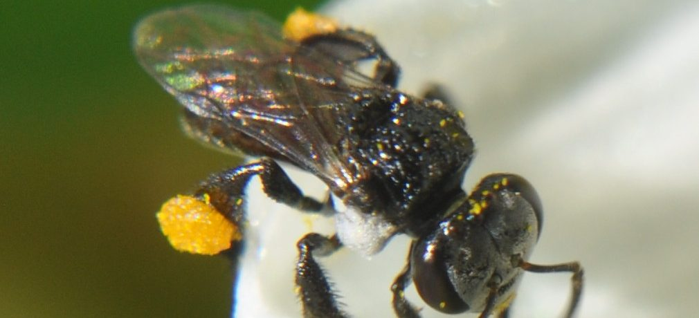 Saturday, 24 August 2019, 12 – 4 pm – native stingless bees including splitting a hive with Tim Heard