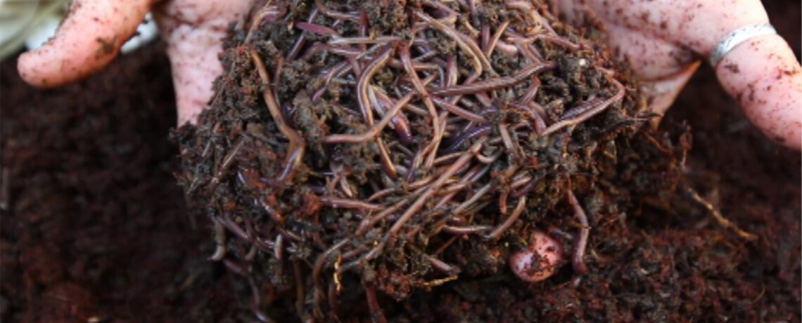 Saturday, 6th February 2021, 4pm to 6pm, Composting and Worm farming at home